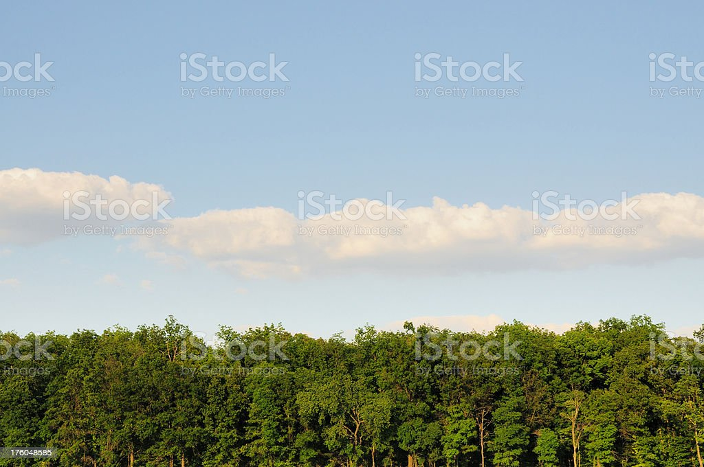 Green Trees Blue Sky and Clouds in Summer stock photo
