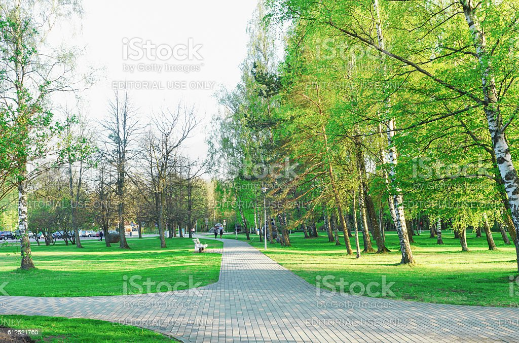 Green Trees in Jurmalas Park in Ventspils of Latvia stock photo