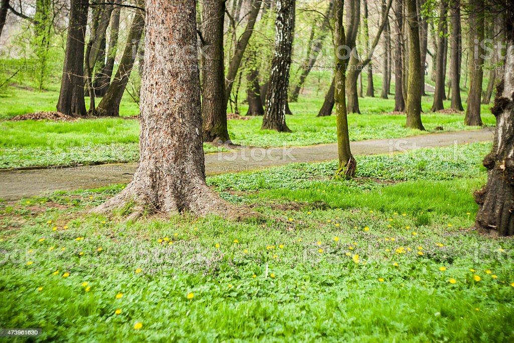 Green trees in park in spring stock photo