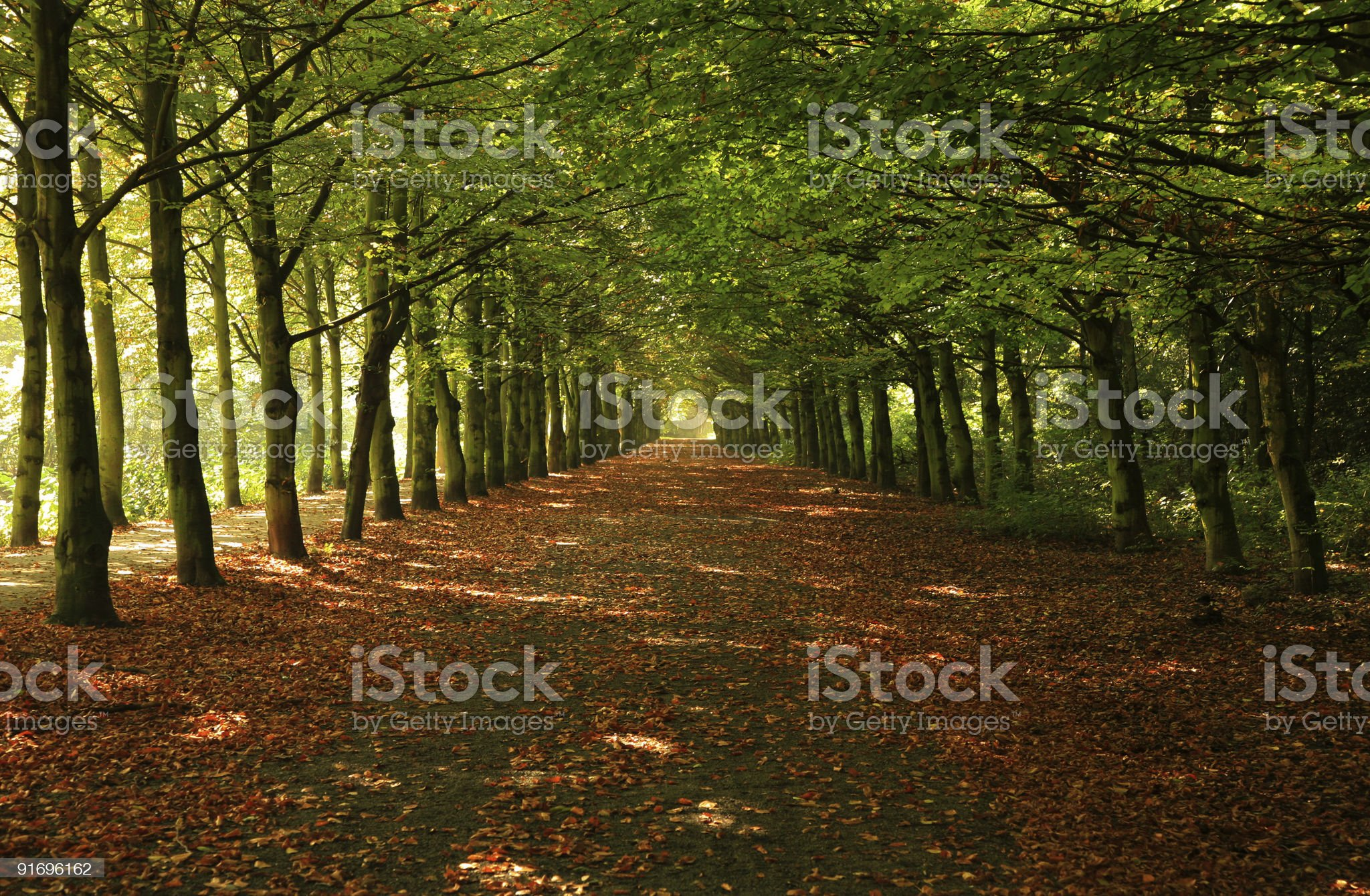 Green trees in row royalty-free stock photo