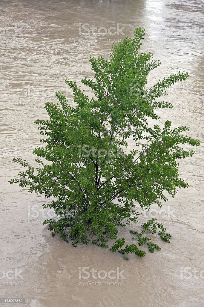 green trees of Elm and Hazel immersed in mud stock photo