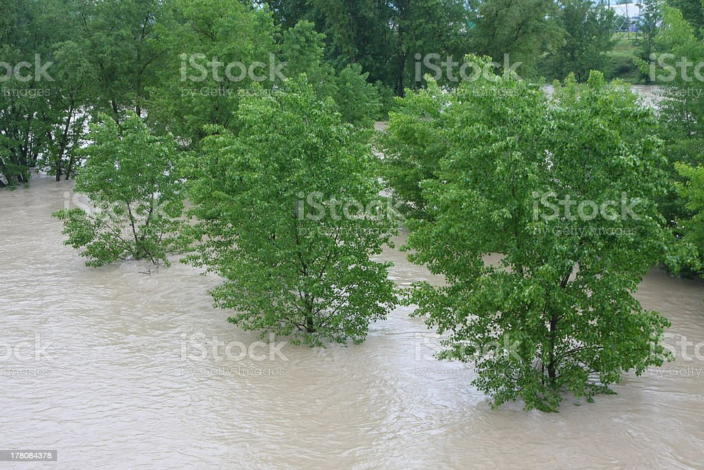 green trees of Elm and Hazel immersed in mud river stock photo