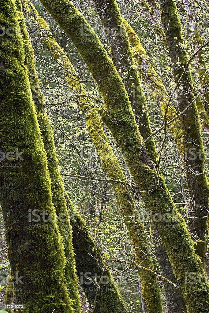 Green Trees royalty-free stock photo