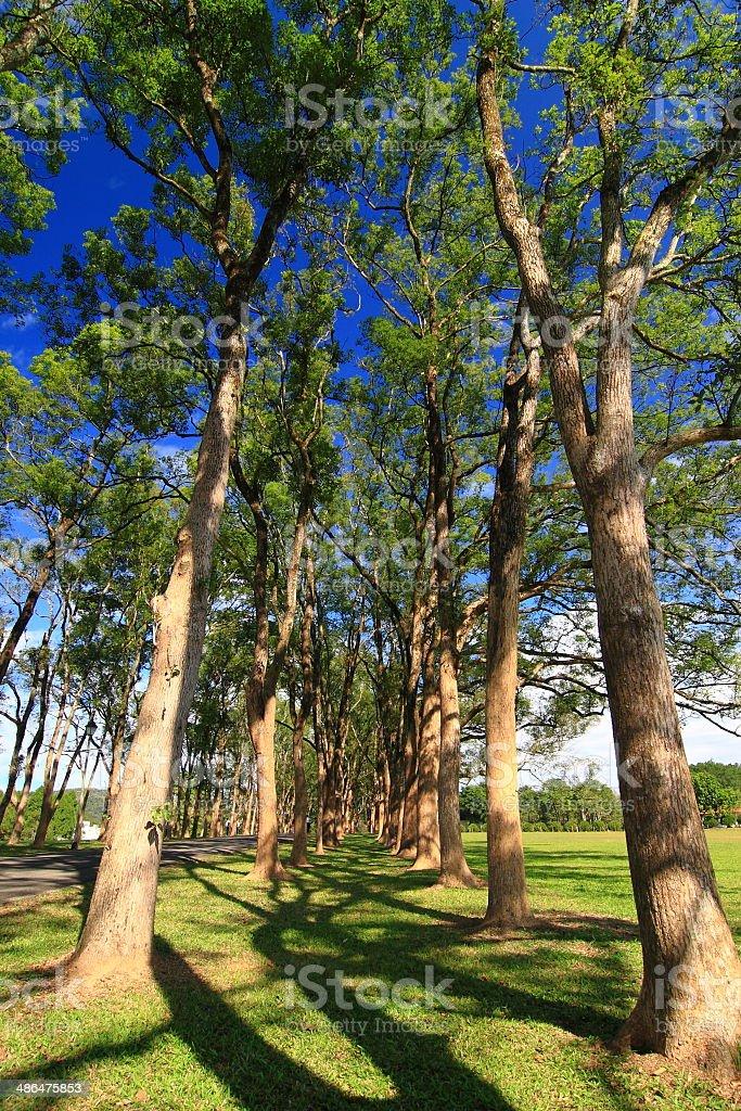 Green trees under blue sky stock photo