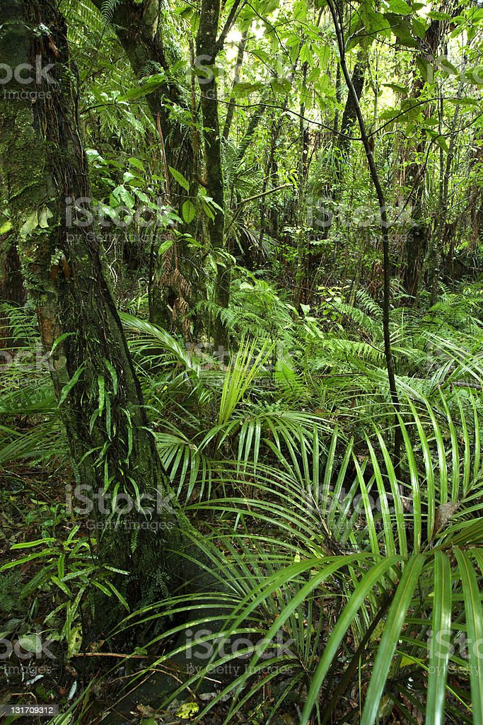 Green tropical forest with ferns royalty-free stock photo