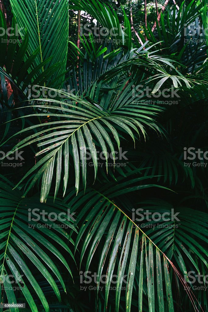 Green tropical plant stock photo