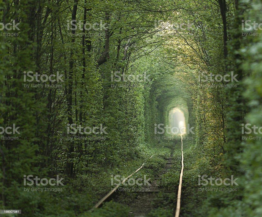 Green tunnel. stock photo