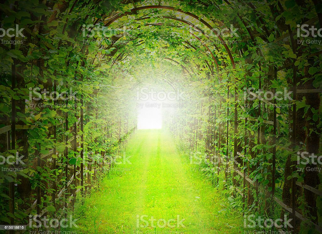 Green tunnel with sun rays. stock photo
