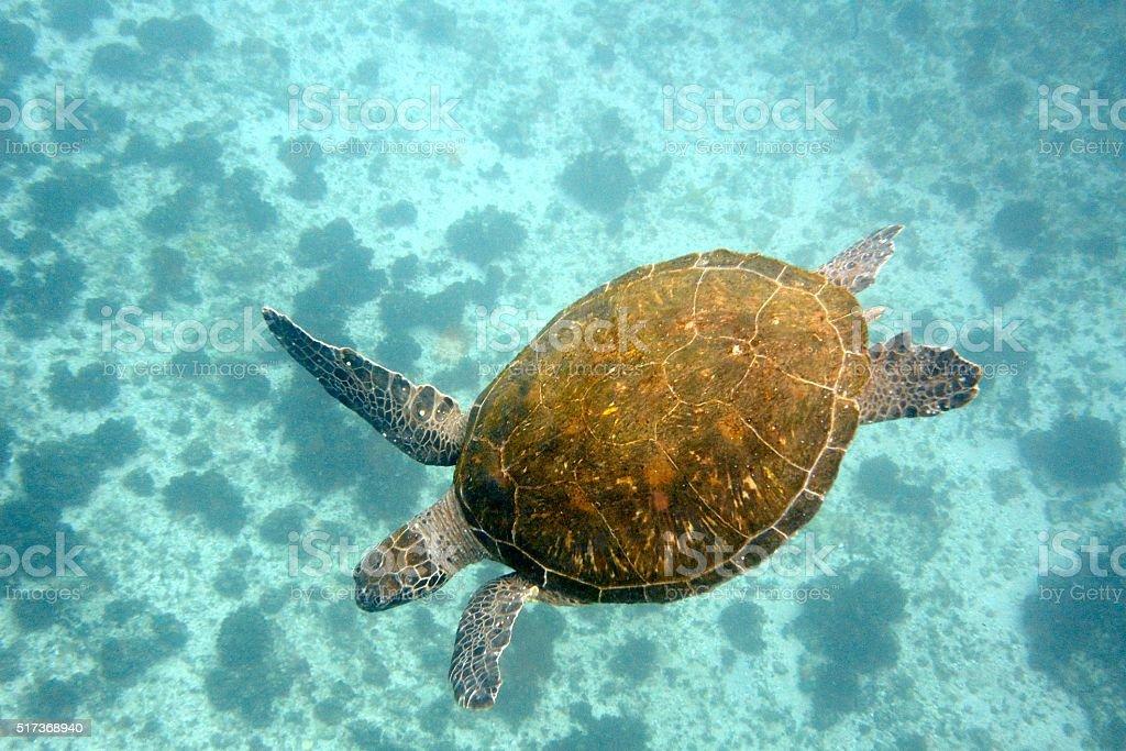 Green turtle and ocean floor stock photo