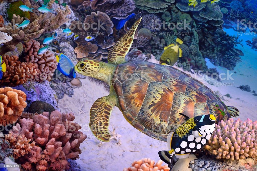 Green turtle coral reef stock photo
