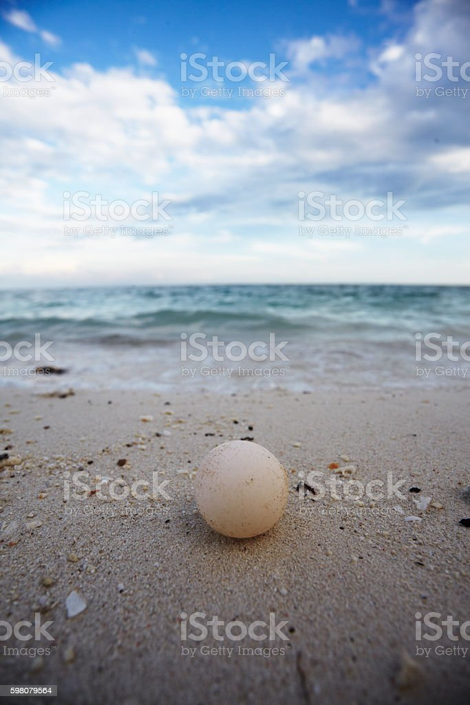 green turtle egg stock photo