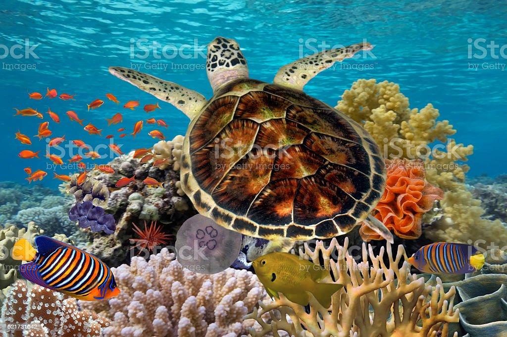 Green turtle swimming in blue ocean stock photo