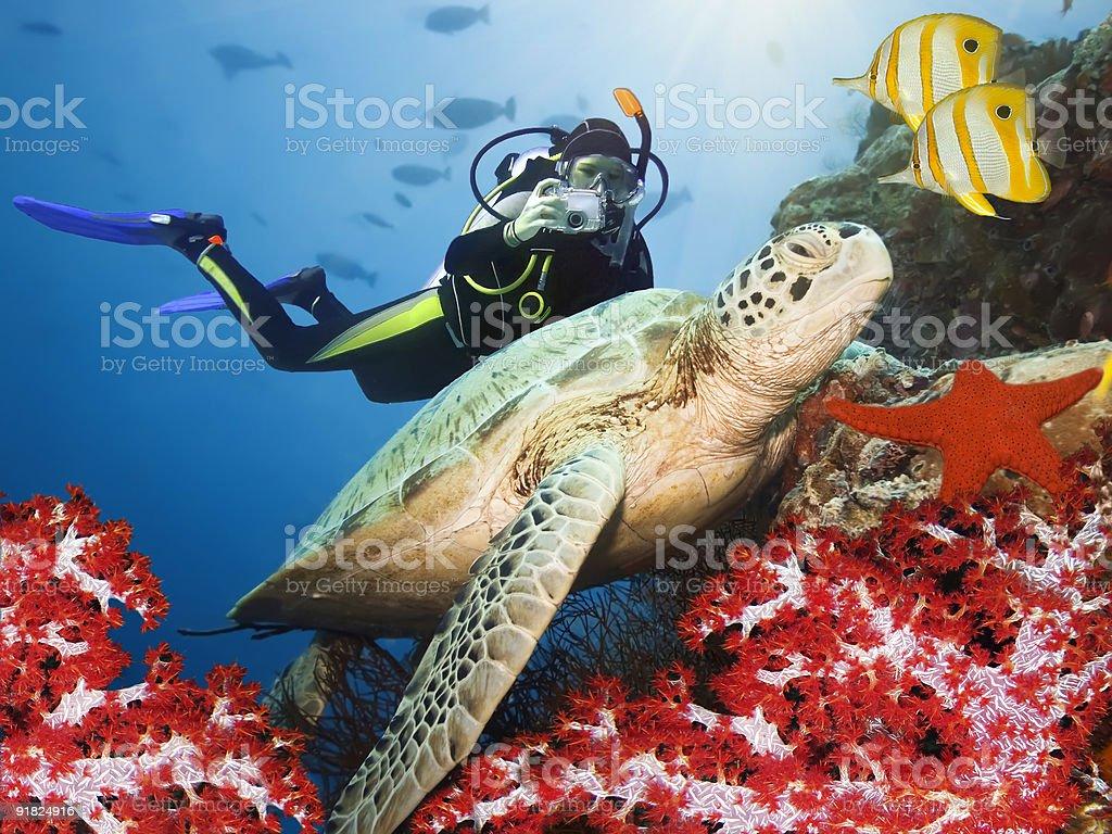 Green turtle underwater royalty-free stock photo