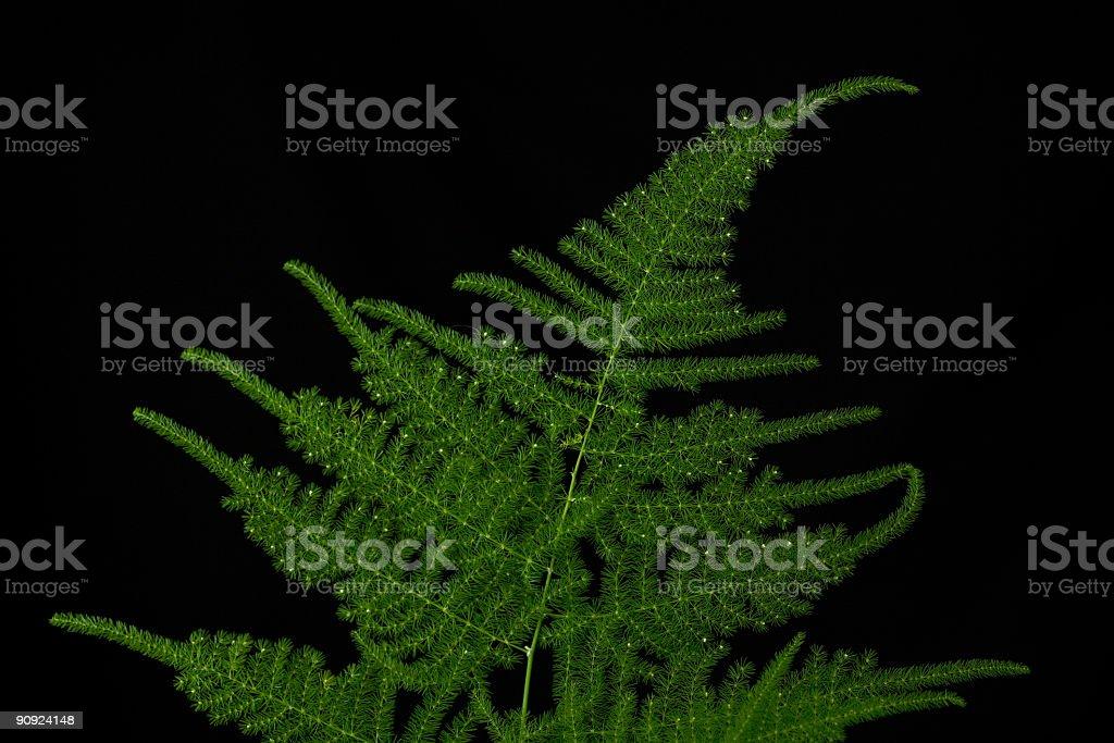 Green twig stock photo