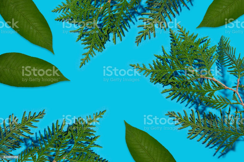 Green twigs and leaves isolated stock photo