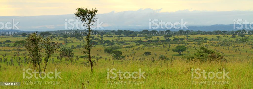Green Ugandan  Valley stock photo