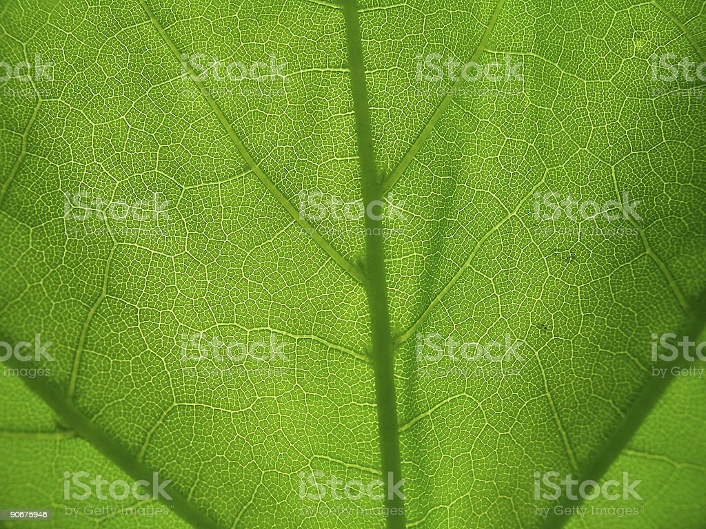 Green Underleaf royalty-free stock photo