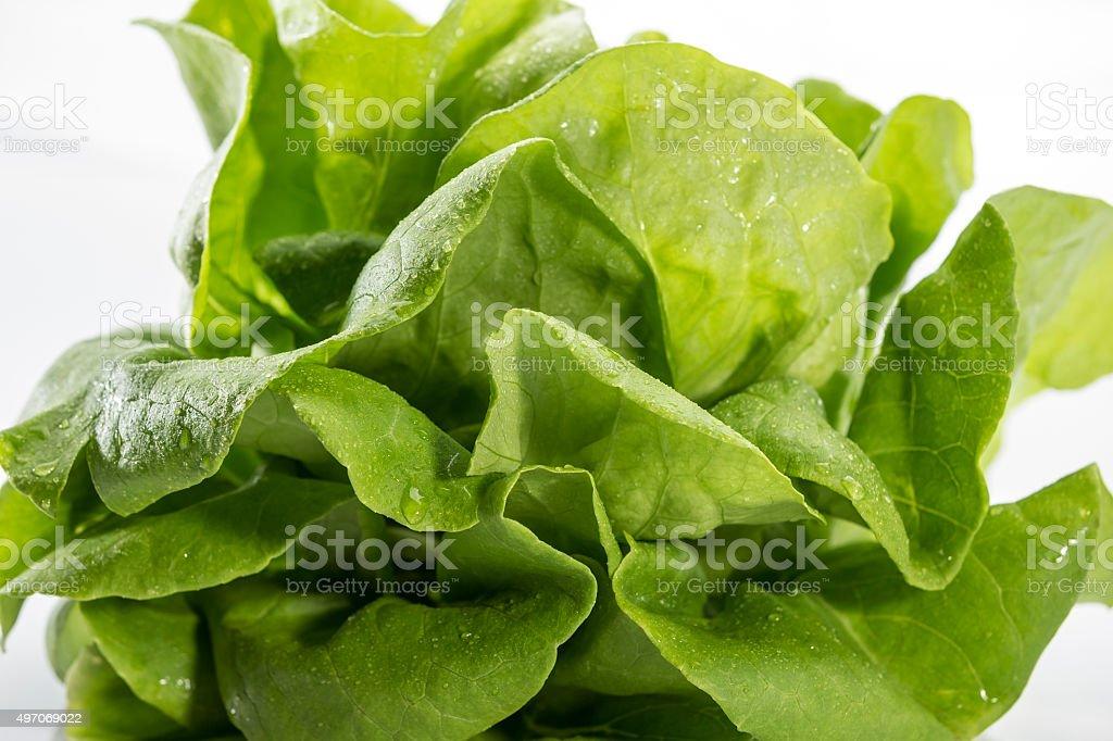 Green vagetable weißem Hintergrund Lizenzfreies stock-foto