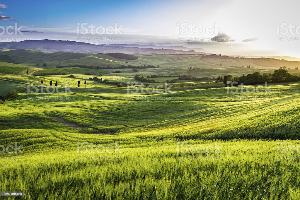 Green valley at sunset in Tuscany stock photo