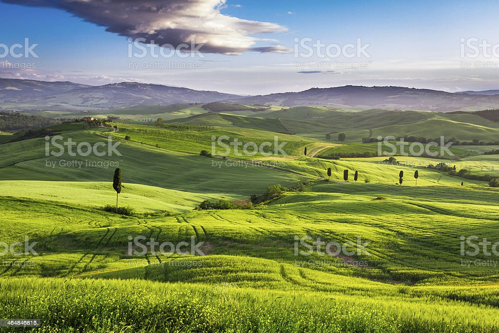 Green valley at sunset in Tuscany royalty-free stock photo