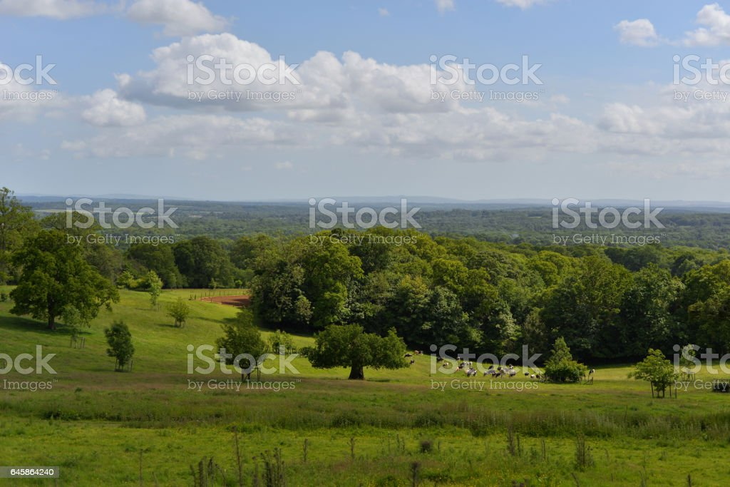 Green Valley forest stock photo