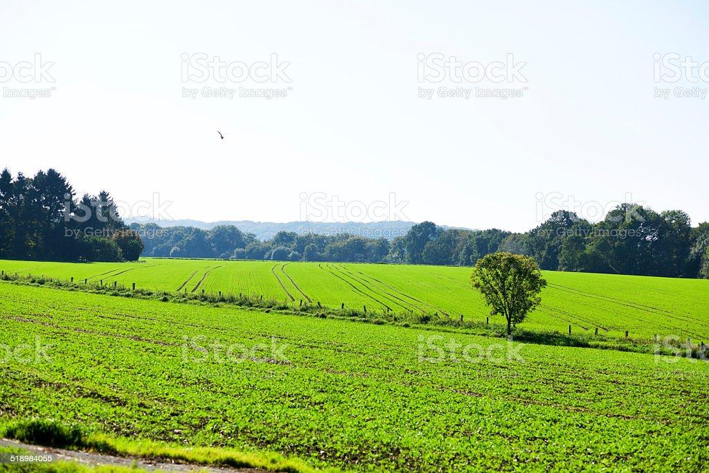 Green valley Ruhr in autumn stock photo