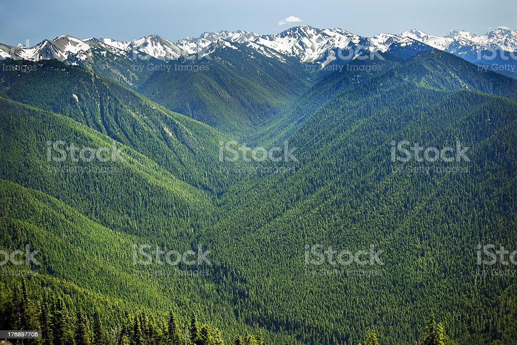 Green Valleys Snow Mountains Hurricane Ridge Olympic National Park Washington stock photo