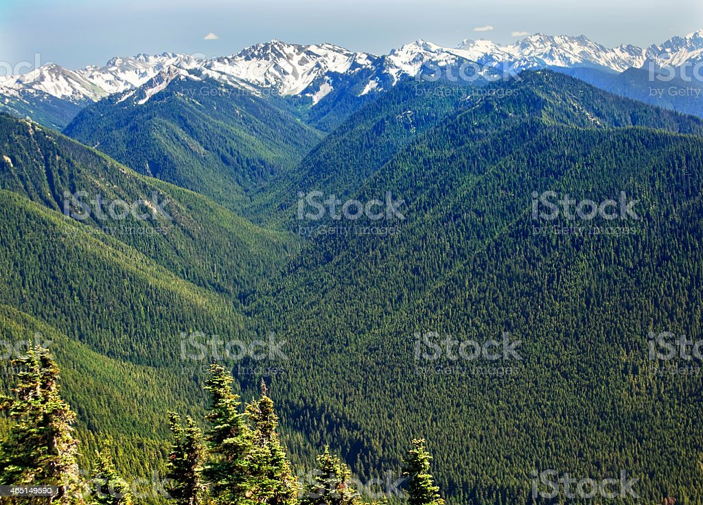 Green Valleys Snow Mountains Hurricane Ridge Olympic Park Washington stock photo
