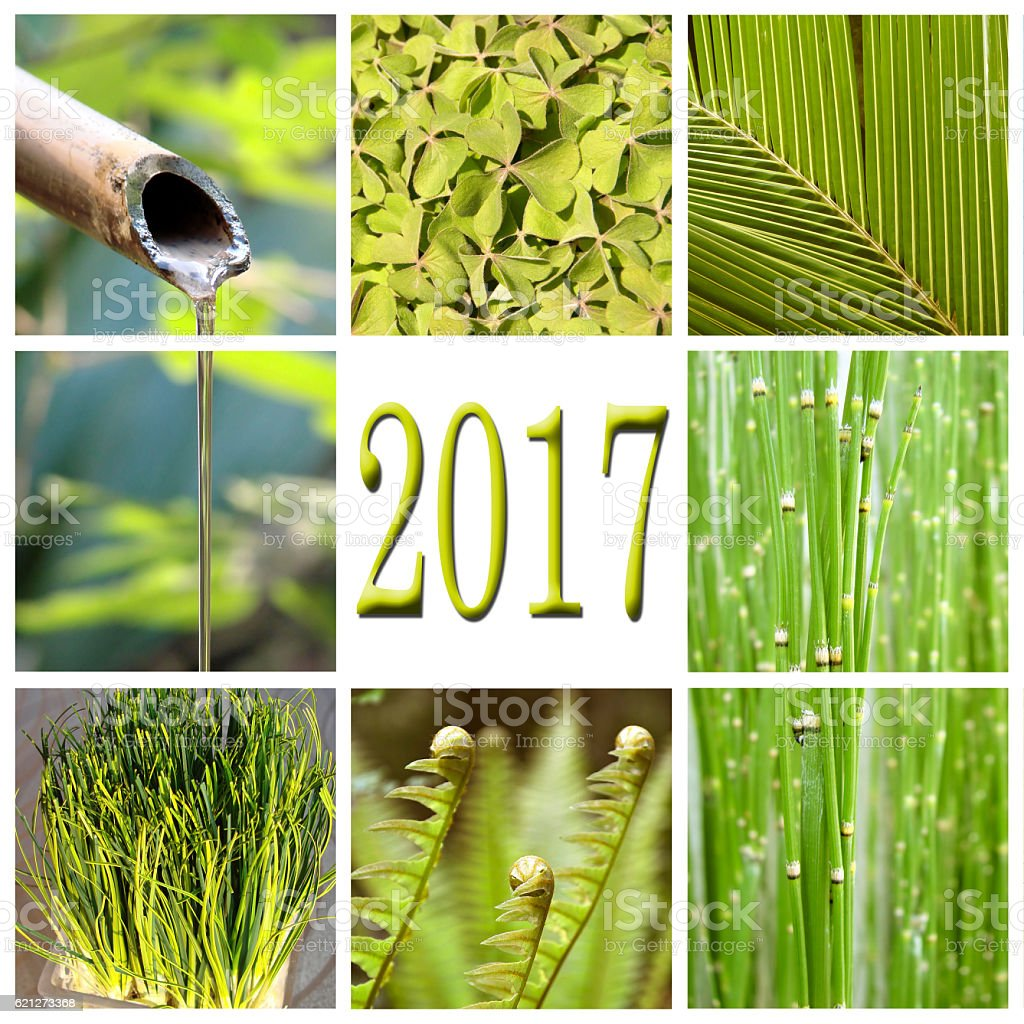 2017, green vegetation collage stock photo