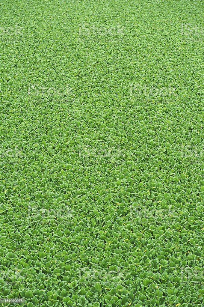 Green Vegetation royalty-free stock photo