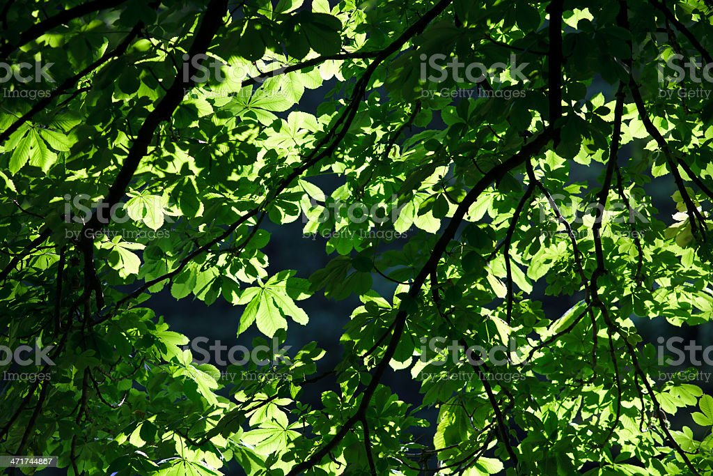 Green veil royalty-free stock photo