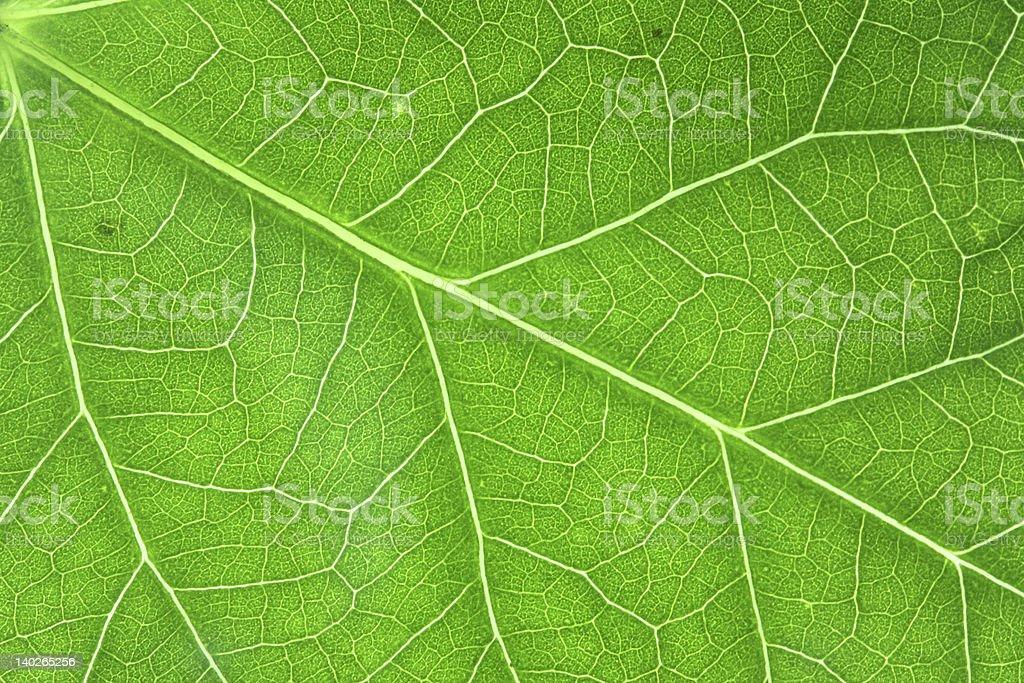 Green veins horizontal royalty-free stock photo