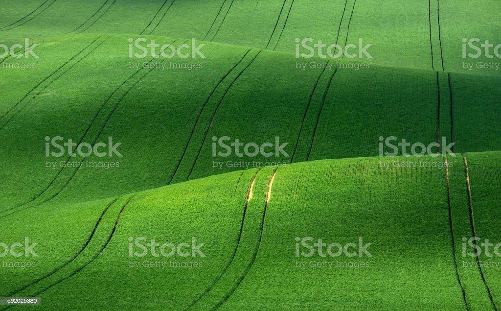 Green velvet stock photo