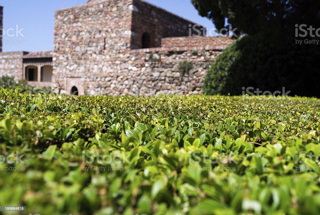 Green Vibrant Hedge in a Roman Villa royalty-free stock photo