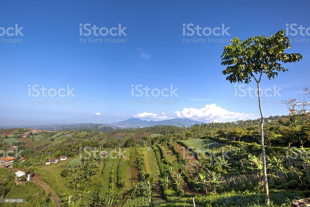 Green View of hills and farms in South Asia Indonesia stock photo