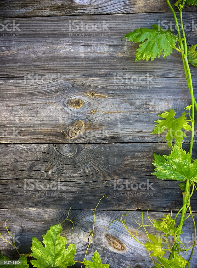 Green vine on gray wooden background stock photo