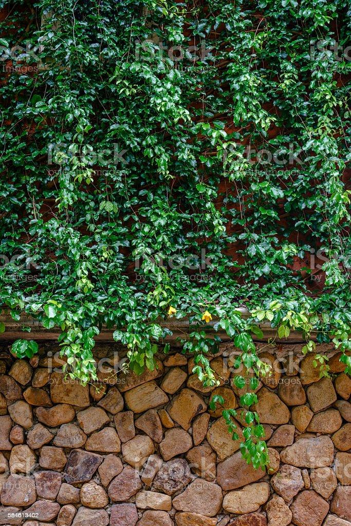 Green vines covering stone wall photo libre de droits