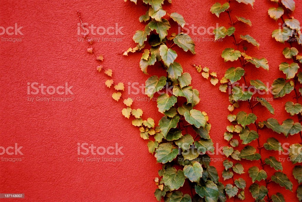 Green Vines on Red Wall stock photo