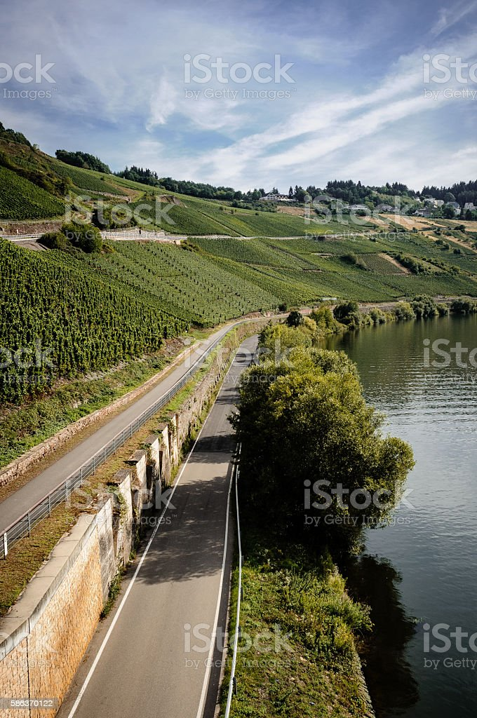 Green vineyard along the Mosel in Germany stock photo
