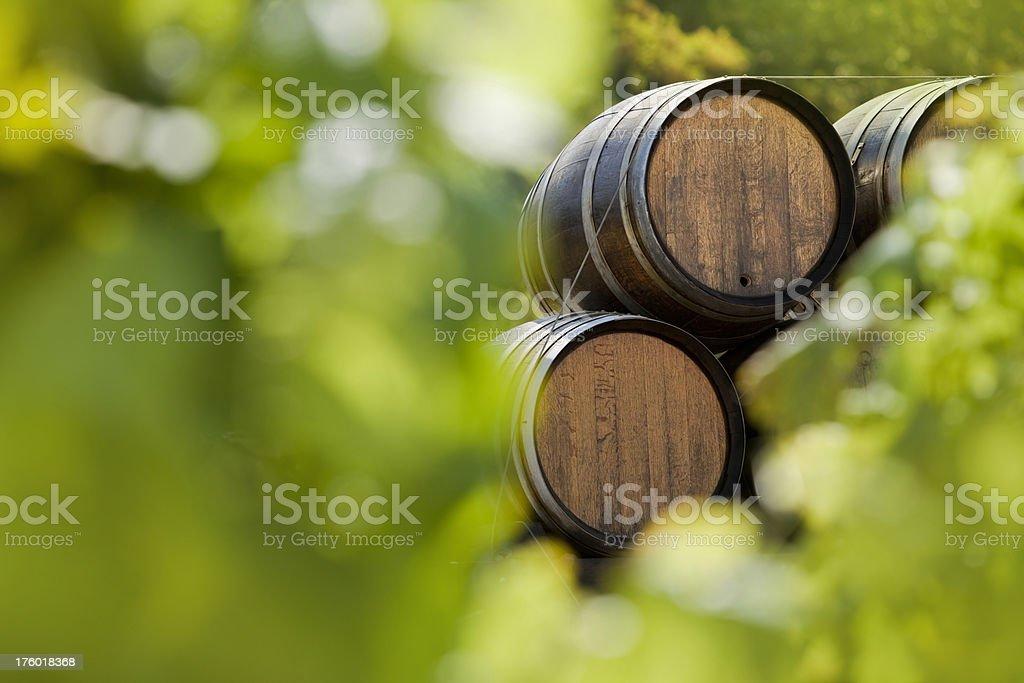 Green vineyard with wine barrels royalty-free stock photo