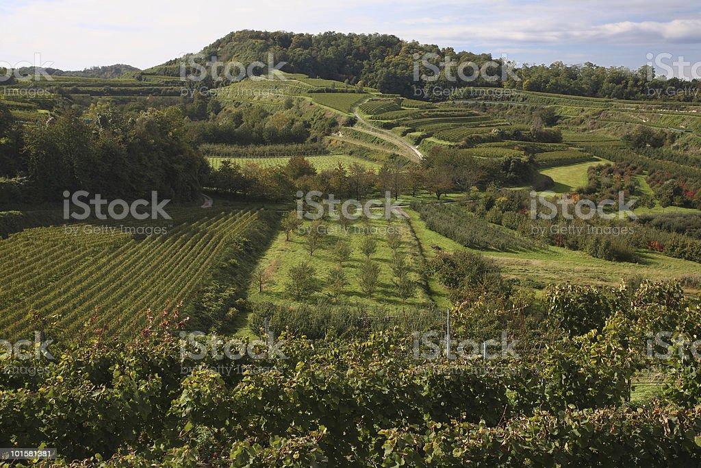 Green Vineyards in Kaiserstuhl stock photo