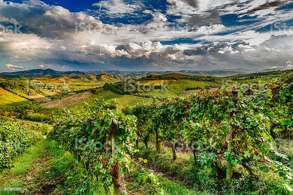 green vineyards of Italian hills stock photo