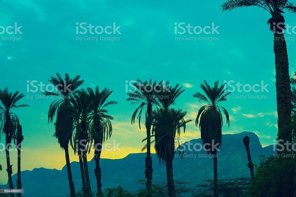 Green vintage sunset in desert. Palm trees against mountain stock photo