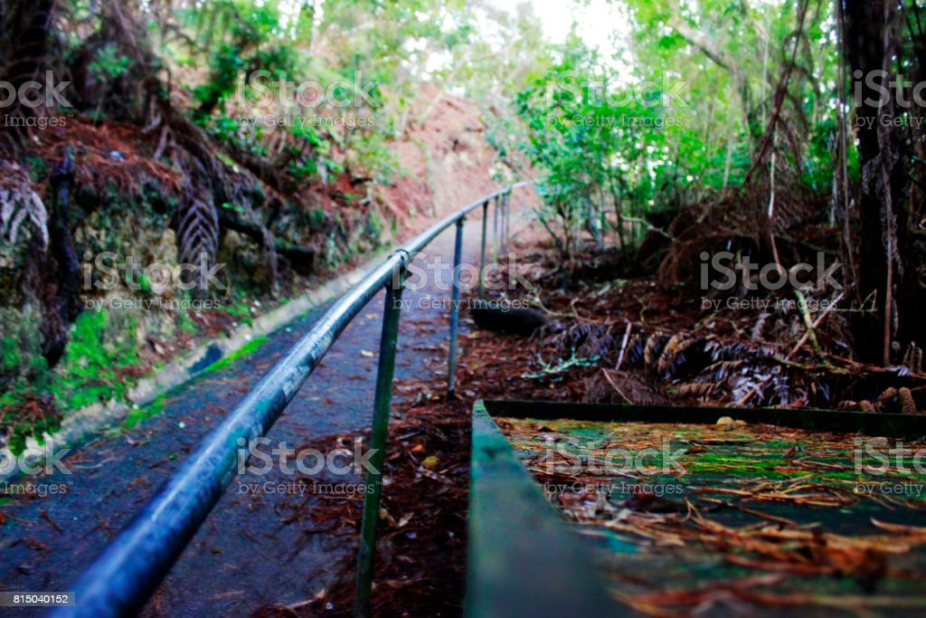Green walking path stock photo