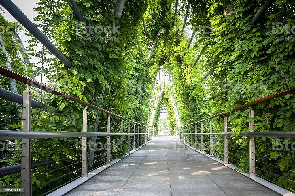 green  walkway royalty-free stock photo
