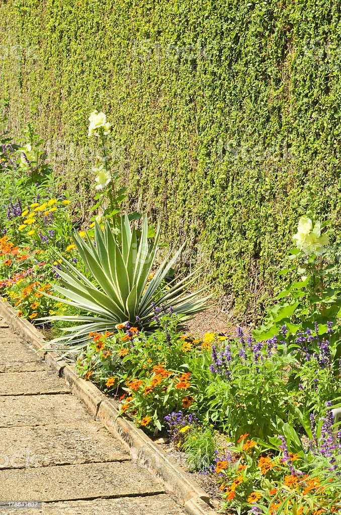 Green wall and flowerbed along path in formal Floridian garden stock photo