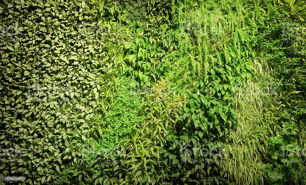 Green Wall, BioWall, Plants stock photo