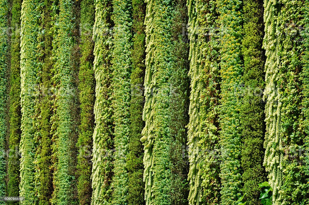 Green Wall Biowall with Plants stock photo