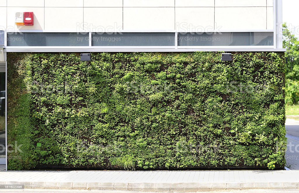 Green wall building royalty-free stock photo
