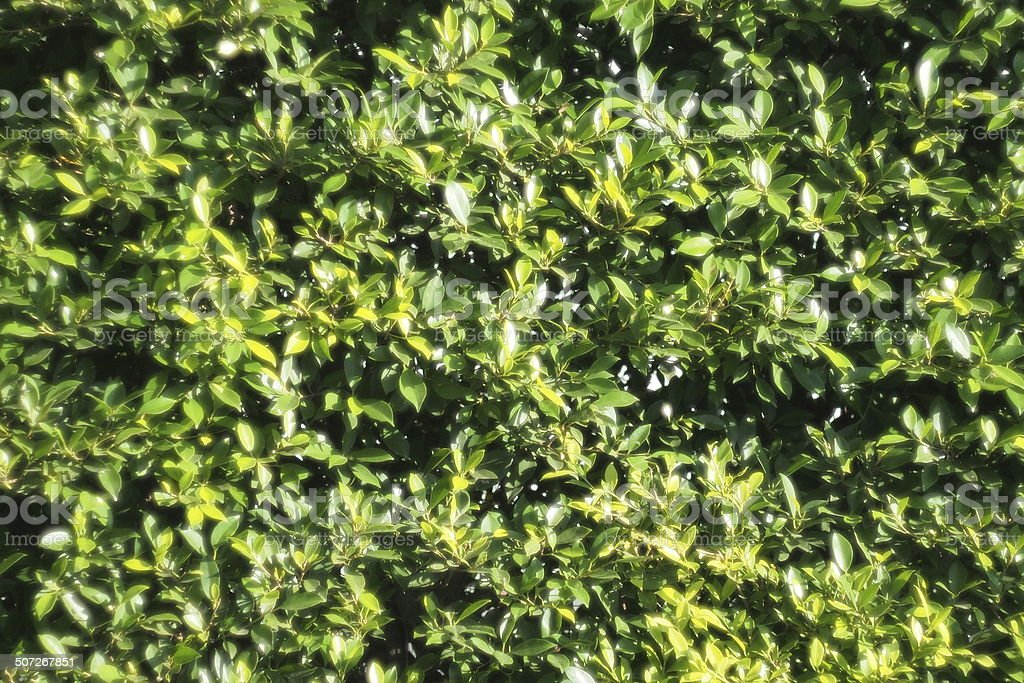 THE green wall stock photo